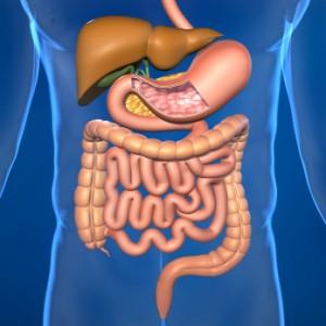Colonics-Digestive-System